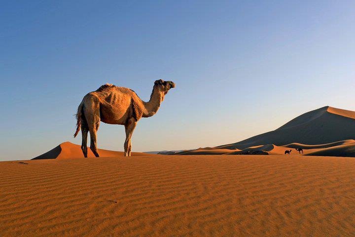 desert m
